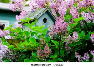 Birdhouse among Lilacs