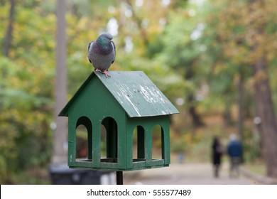 birdhouse with a dove on it and bird poop