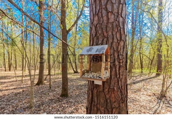 Birdhouse Hanging On Tree Small Wooden Animals Wildlife Nature