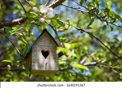Birdhouse with heart shaped opening  hanging in an apple tree in the spring