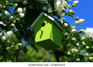 birdhouse in jasmine