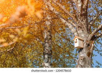 A birdhouse on a birch tree with yellow leaves.