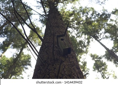 birdhouse on a large pine in the forest
