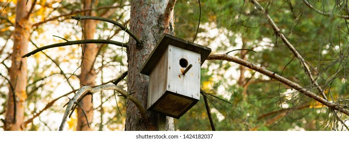 Birdhouse on a pine in the forest. Simple birdhouse design. Shelter for bird breeding