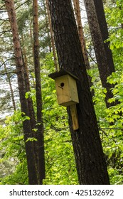 birdhouse on the pine tree