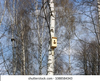 Birdhouse on a tree in a birch grove in the spring