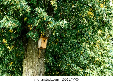 Birdhouse on tree at springtime in early autumn.