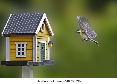 birdhouse and tit