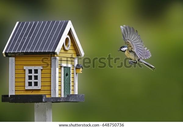 https://image.shutterstock.com/image-photo/birdhouse-tit-600w-648750736.jpg