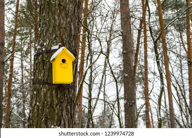 Birdhouse in winter. The snow on the birdhouse. Place for your text.