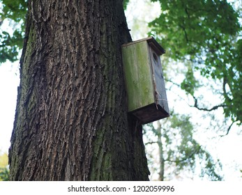 Birdhouse, wooden bird feeder on the tree