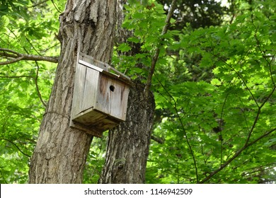 Birdhouses in the forest.