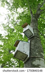 Birdhouses in the green forest.