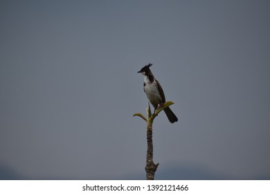 Birdi wating for his moment to fly