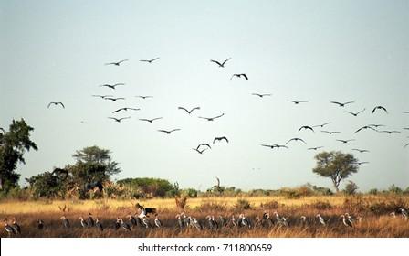 Birdlife, Okavango Delta, Botswana