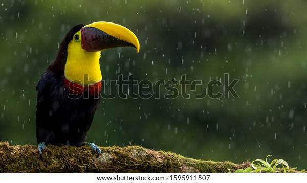 Birds 4k Ultra Hd Wallpapers Natural Animals Wildlife Stock Image 1595911507