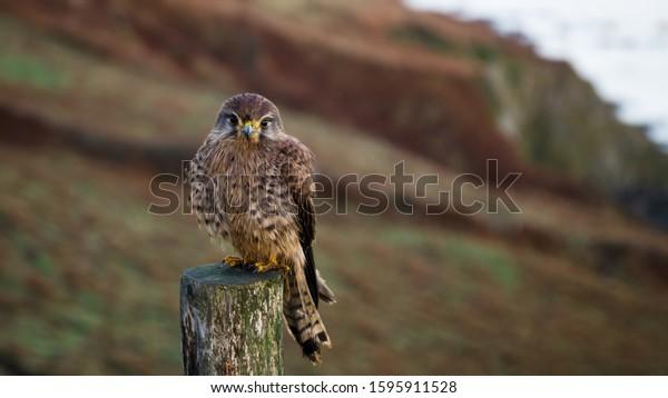Birds 4k Ultra Hd Wallpapers Natural Animals Wildlife Stock Image 1595911528