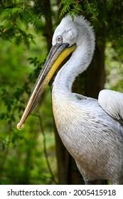 birds of Africa Belican Zoo Schmieding