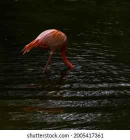 birds of Africa Flamingo zoo Schmieding