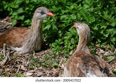 birds of Africa in the savanna