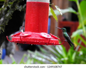 Birds of America. Panama, Costa Rica.