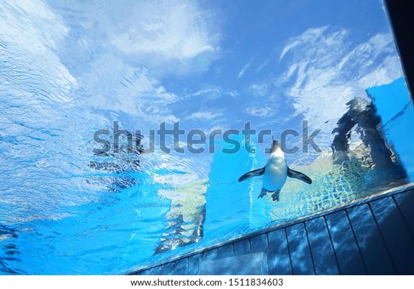 https://image.shutterstock.com/image-photo/birds-aquarium-ikebukuro-600w-1511834603.jpg