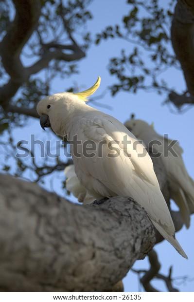Birds in Australia