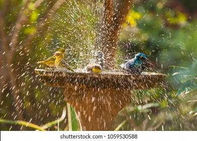 Birds at birdbath