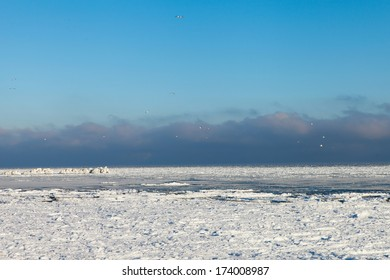 Birds in blue sky above frozen Baltic sea.