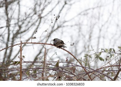 Birds build their nests in the branches of trees