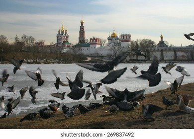 Birds bustle at convent and pound in Moscow.