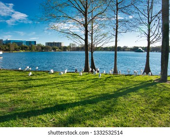 Birds by the Lake