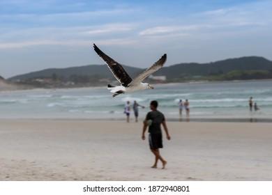 Birds in Cabo Frio RJ