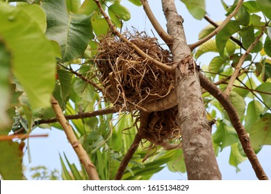 The birds choose to nest in the tree may be due to many factors, such as the need for coolness. And can raise children without fear of danger. Birds benefit from the coolness and height of the tree.