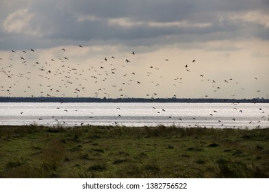 birds in a cloudy sunset, north sea island langeoog