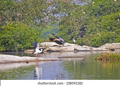 Birds and crocodile on the South-Indian river Kaveri
