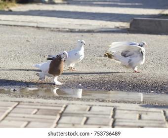 birds doves on the sidewalk