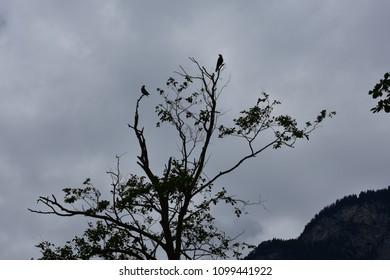 Birds in dramatic silhouette