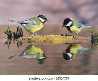 Birds drinking from the water.