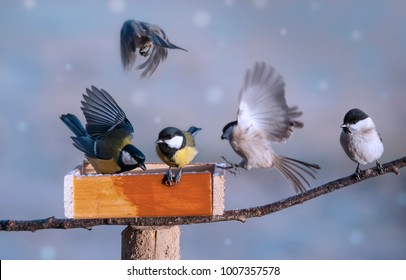 birds eating seed from bird feeder in the winter time