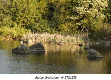 Birds enjoying the sun on rocks at Charleston Park lake, Vancouver, BC