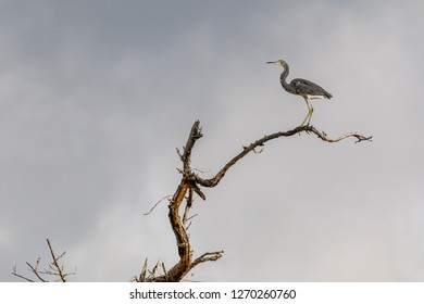 Birds in Everglades National Park in Florida, U.S.