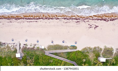 Bird's Eye View Looking Straight Down in Ocean Ridge. A Lovely Sunrise on Boynton Beach Florida with the Ocean, Sand, Seaweed, Cabanas, Bushes and Palm Trees All in View