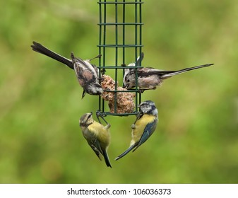 Birds feeding on a bird feeder