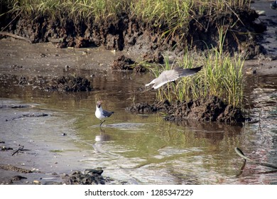 Birds fighting over food on muddy riverbank