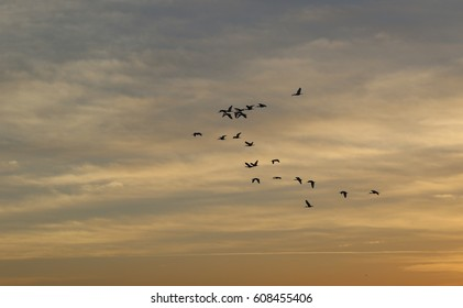 Birds in Flight at Dusk