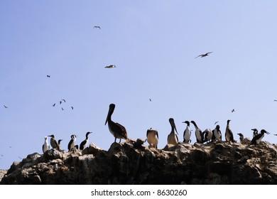 a lot of birds flocking on a big rock at sea shoreline