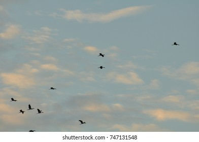Birds fly back to the nest in the evening, the clouds in the beautiful sky in bright days.