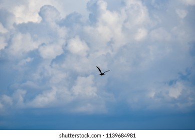 Birds fly over the sky and water