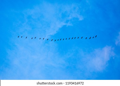 birds fly together in the blue sky